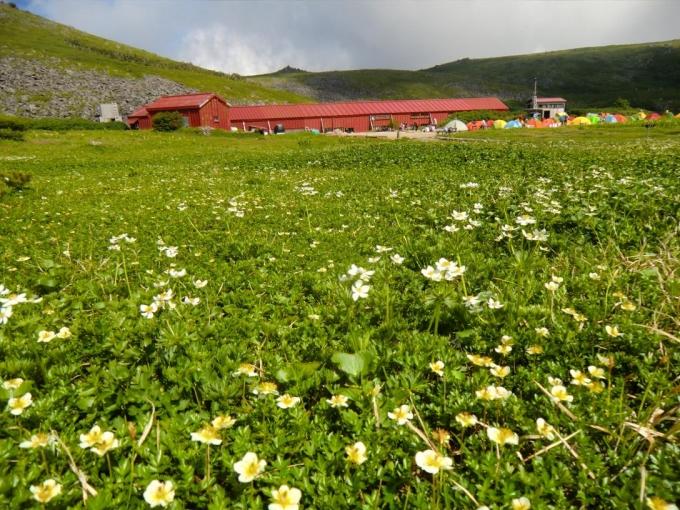 お花畑と白馬大池山荘