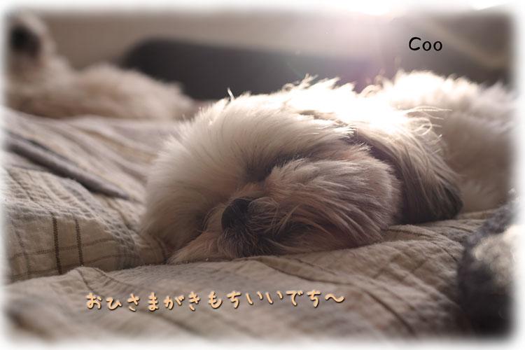 DSC03471_9034.jpg