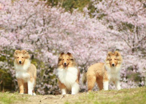 2015-03-31桜2