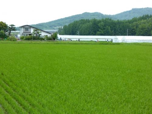 img2015-06-K-ai-Nayoro01.jpg