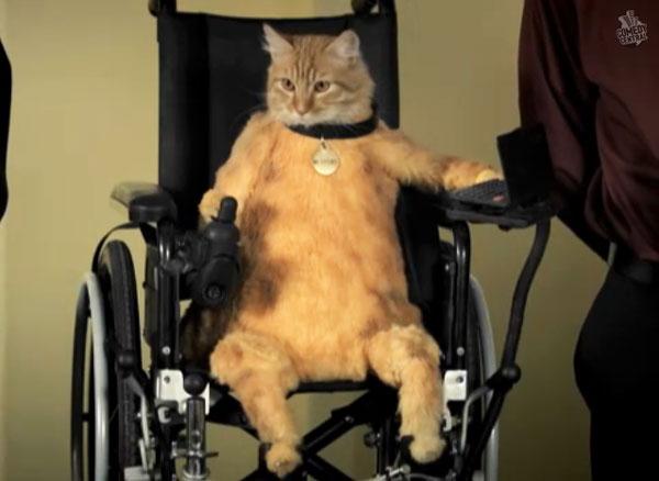 車椅子かくごだにゃあ