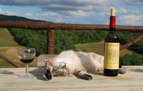 酔っ払い猫