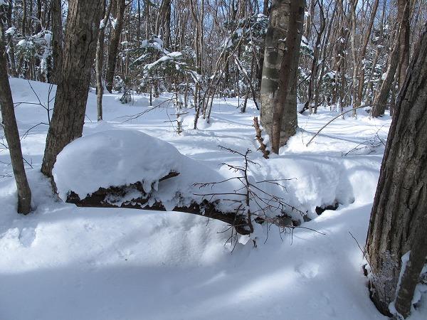 雪の芸術1