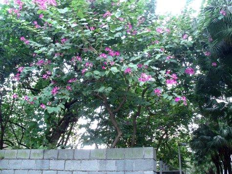 画像ー268 香港 025-2