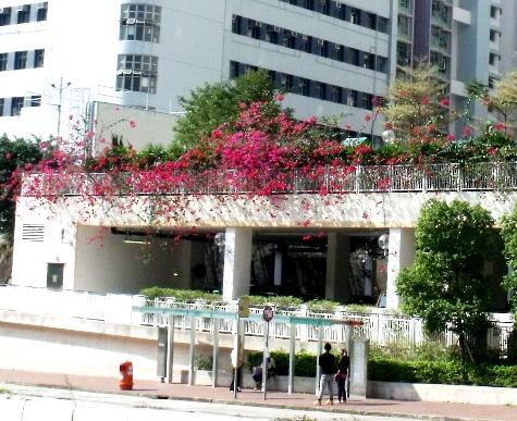 画像ー268 香港 064-3