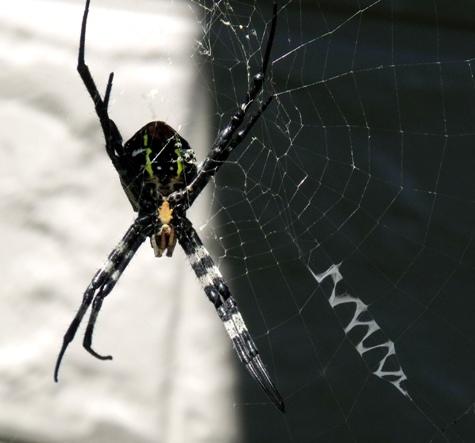 20150714 蜘蛛と 006-2
