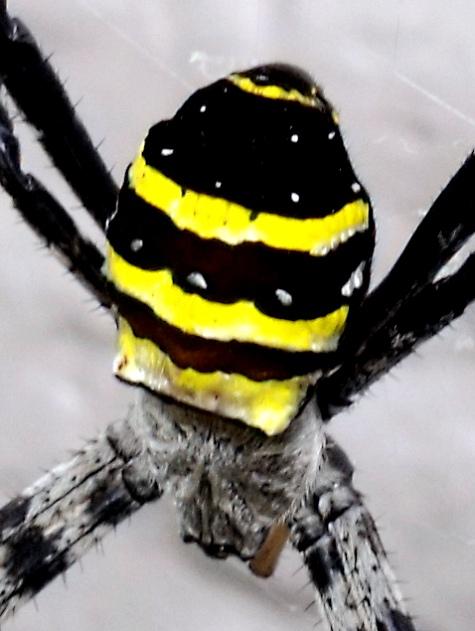 20150717 蜘蛛と鯉 244-2