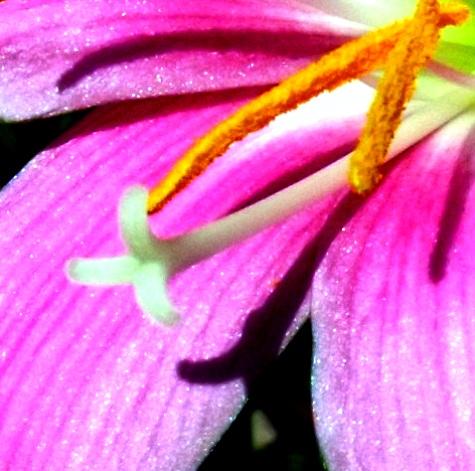 20150803 花とトンボと蟹とカシワバアジサイ 003-4