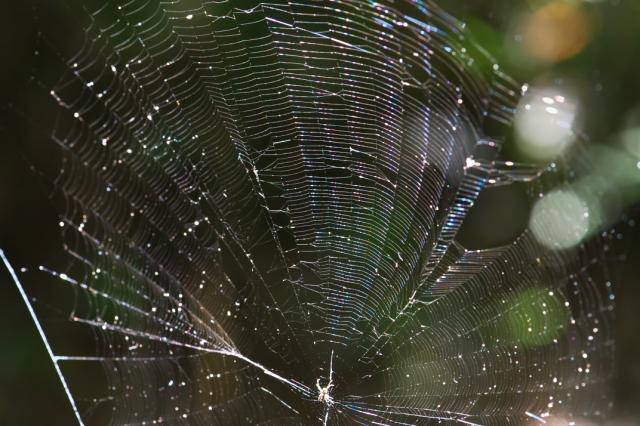 蜘蛛の巣-02