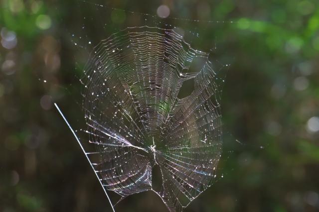 蜘蛛の巣-03