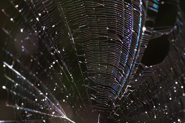 蜘蛛の巣-01