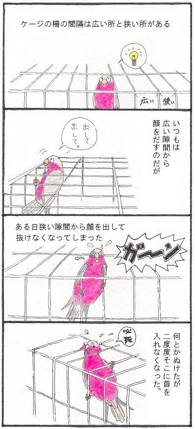 学習する鳥