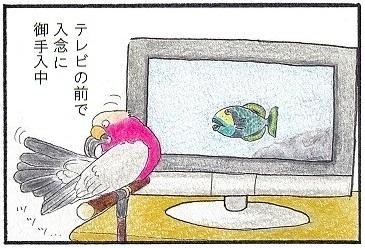 テレビですけど①
