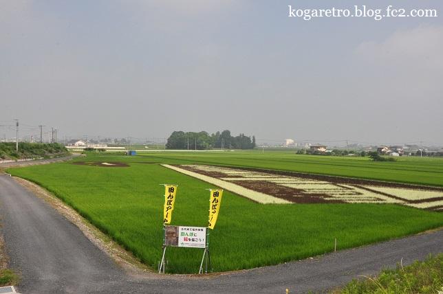 小山の田んぼアート