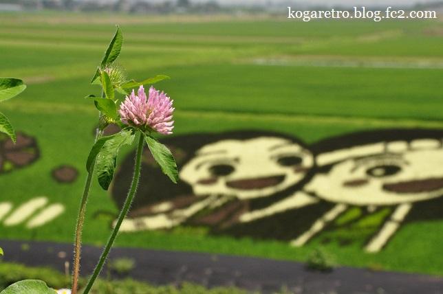 小山の田んぼアート(2)5