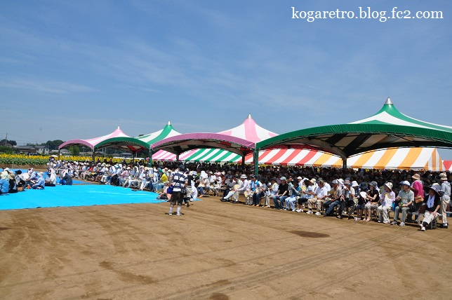 野木ひまわりフェスティバル5
