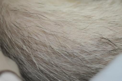 マルコの脱毛2