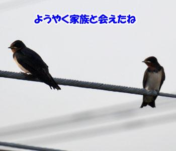 P900001013.jpg