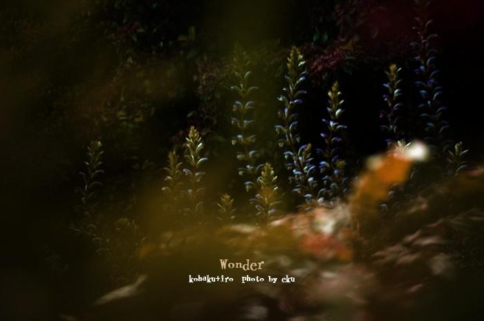 wonder620-1.jpg