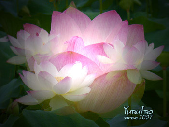 yuruiro20150705_k005