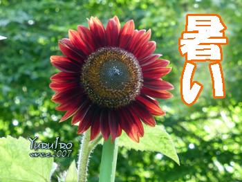 yuruiro20150730_k001