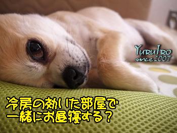 yuruiro20150730_k002