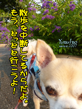 yuruiro20150804_k000
