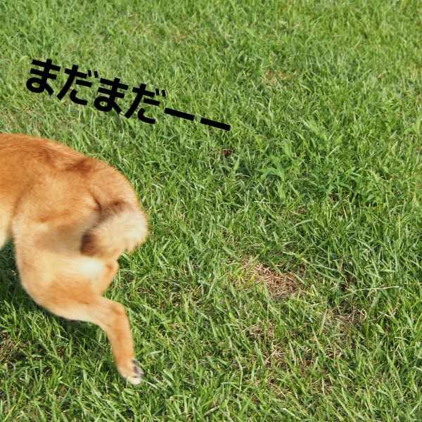 20150424-002.png