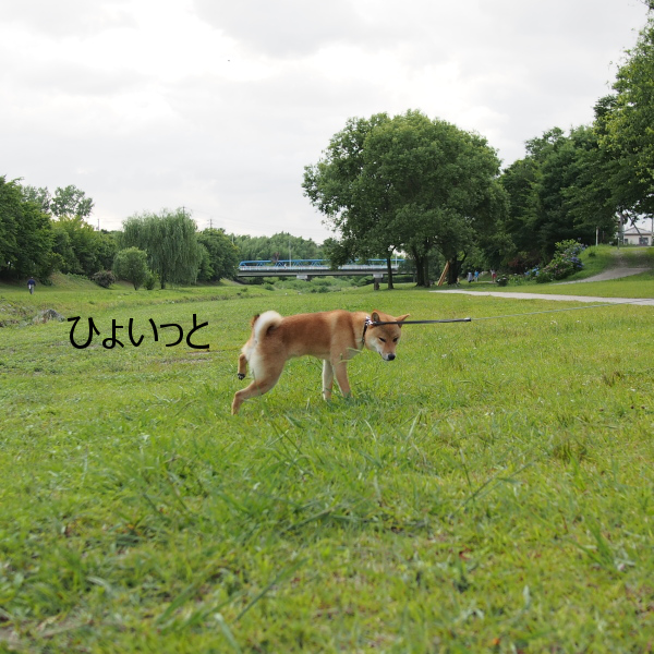 20150623-002.png