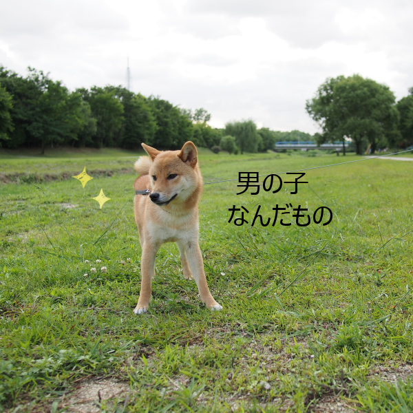 20150623-003.png