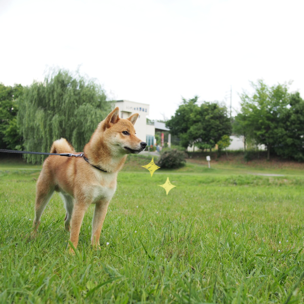 20150628-001.png
