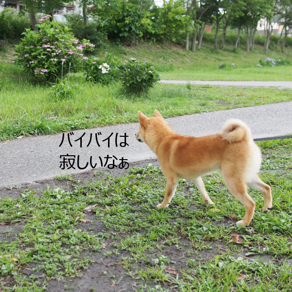 20150628-005.png