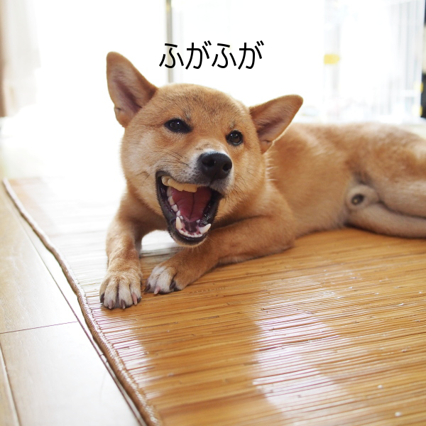 20150630-002.png