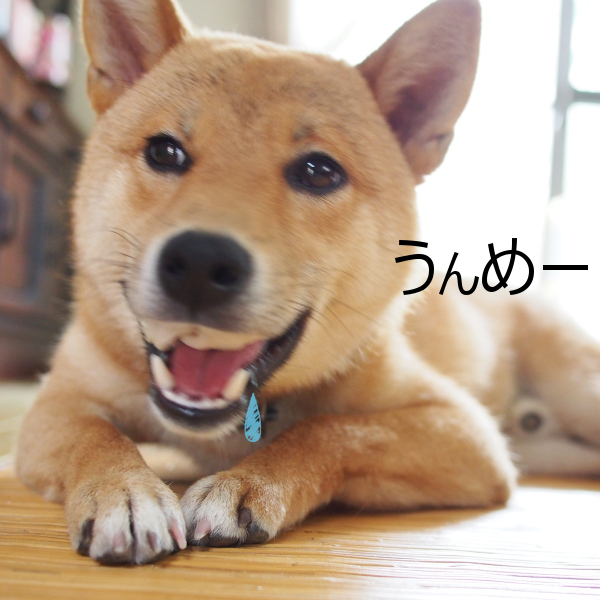 20150630-005.png