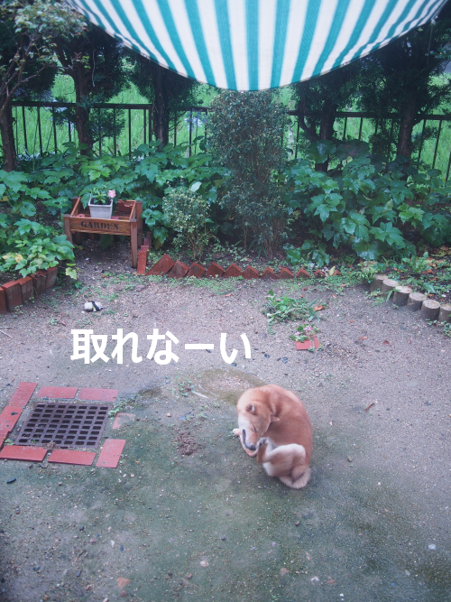 20150713-003.png