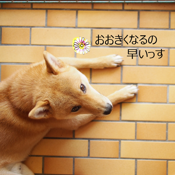 20150714-004.png