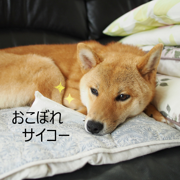 20150716-005.png