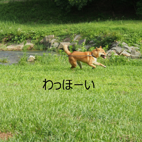 20150724-003.png