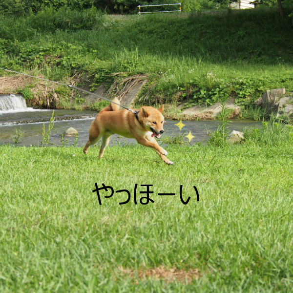 20150724-006.png