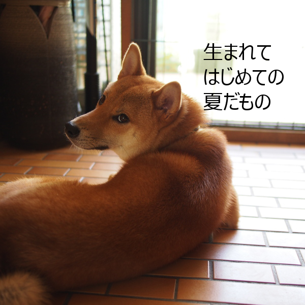 20150728-002.png
