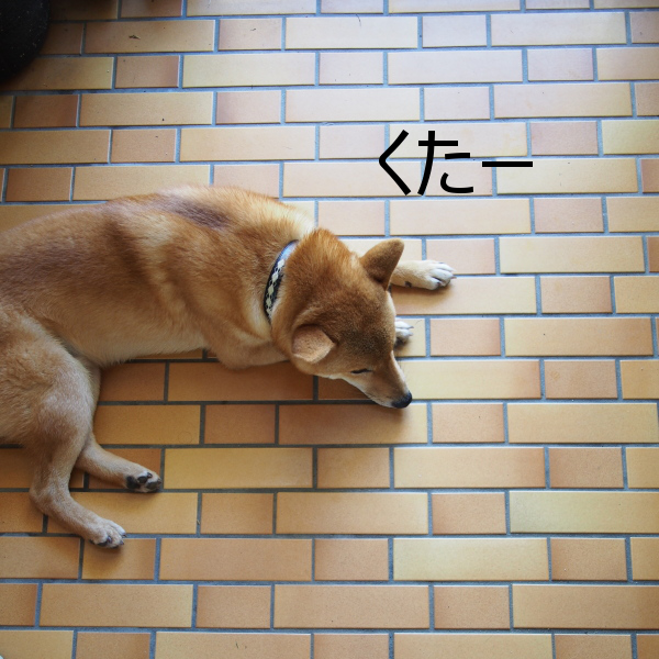 20150728-004.png