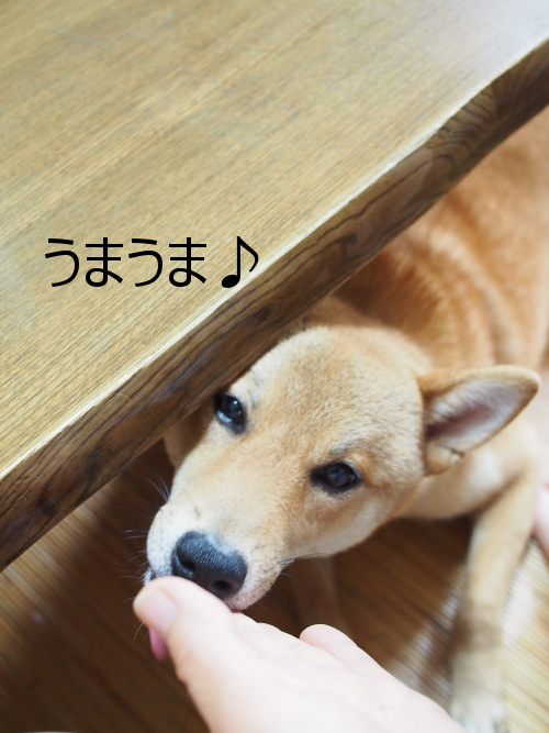 20150730-002.png