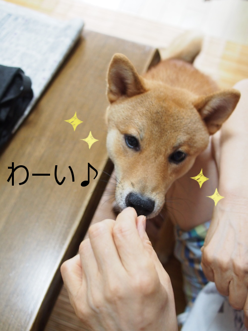 20150730-004.png