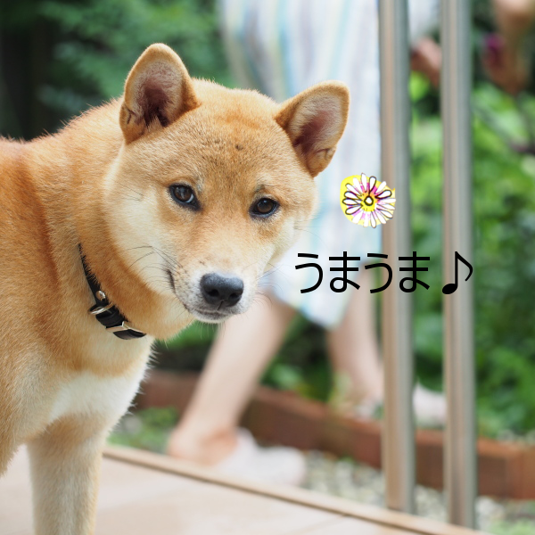 20150730-005.png
