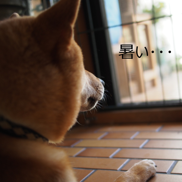 20150731-001.png
