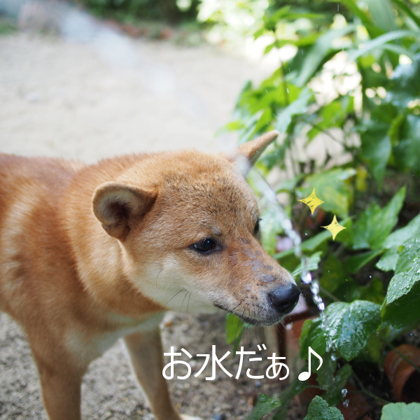 20150812-001.png