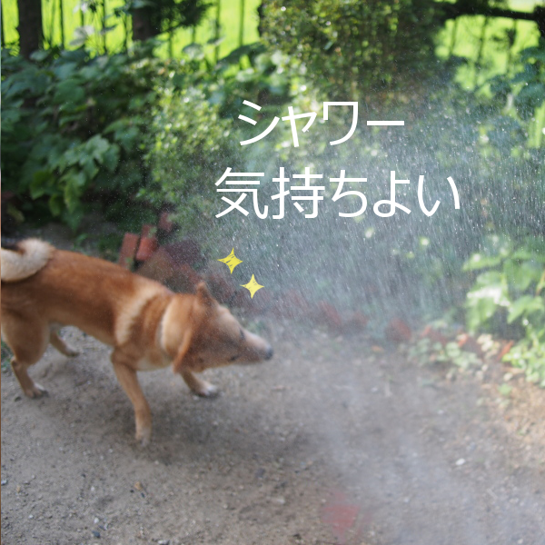 20150812-009.png