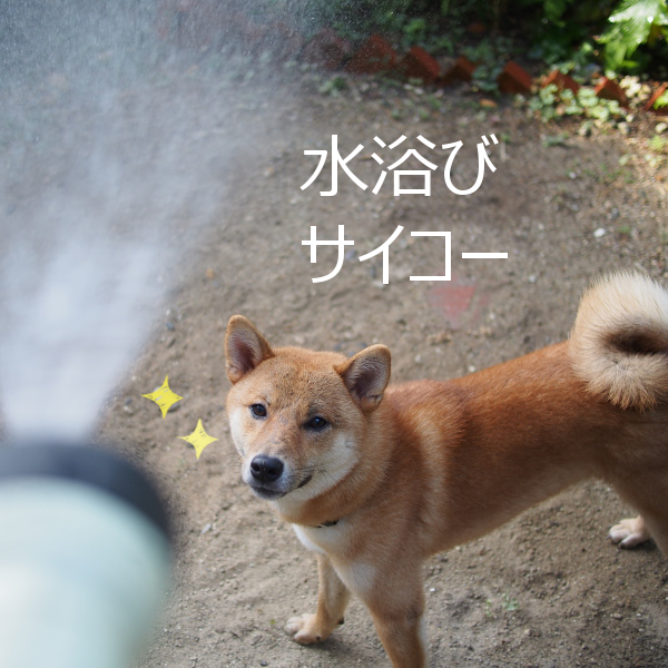 20150812-010.png