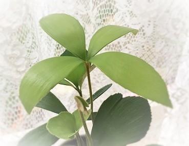 四つ葉のザミア