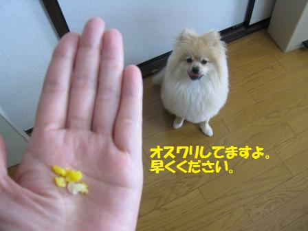 20150617_4.jpg